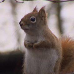Gespotte eekhoorn in Kralingse Bos mag niet blijven