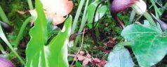 Lentefeest in De Botanische Tuin Kralingen