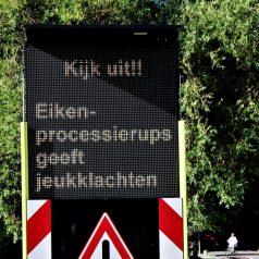 Rotterdam zet vleermuizen in tegen eikenprocessierups