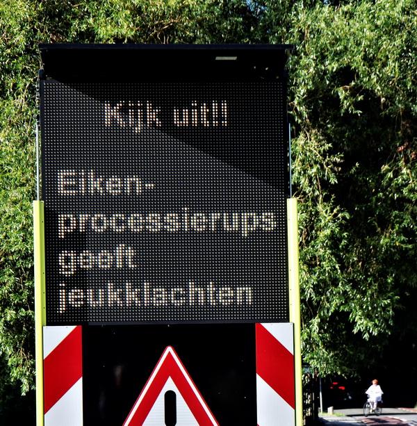 Gemeente waarschuwt: eikenprocessierups nog niet verdwenen uit Kralingse Bos!