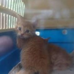 Hardloopsters vinden jonge katten middenin Kralingse Bos