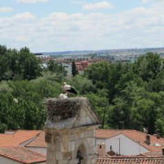 Ga op pelgrimstocht in Spanje