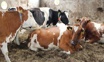 De geschiedenis van de veemarkt van Rotterdam