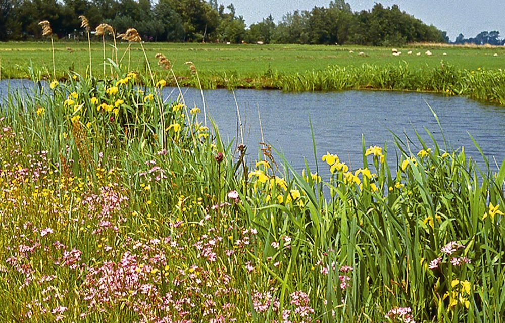 Waterwerken: Natuurvriendelijke oevers voor schoner water