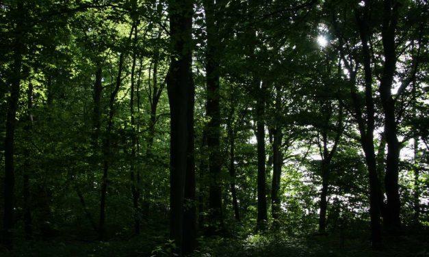 Metaaldetector slaat aan op oude explosieven in het Kralingse bos