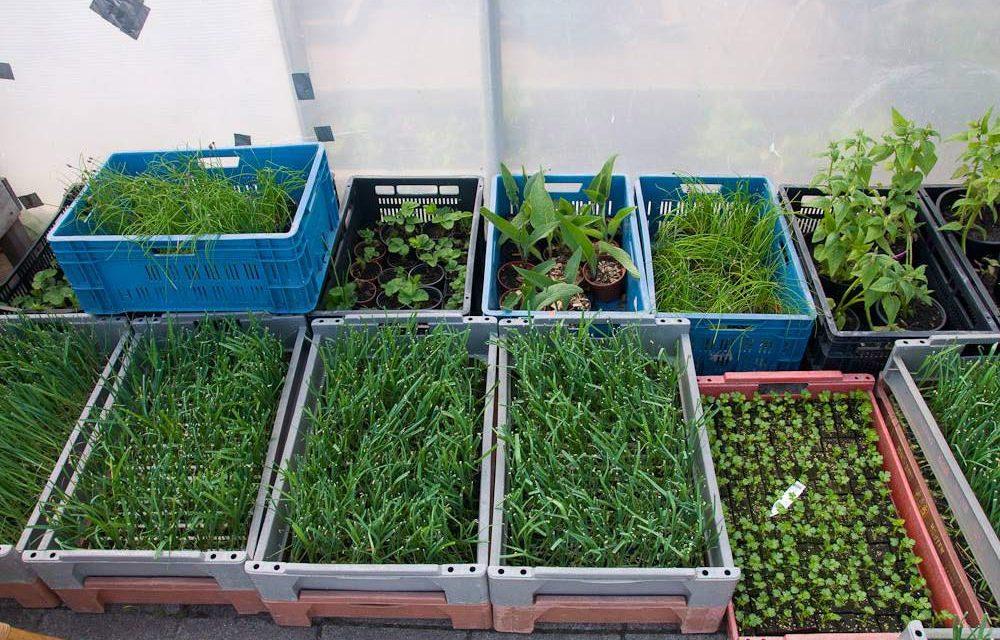 Haal een beetje Voedseltuin naar je éigen tuin of balkon!