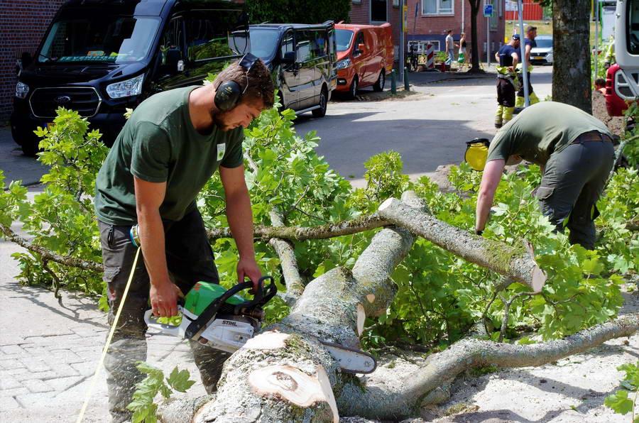 Bomen hofjes Assendelftstraat omgezaagd