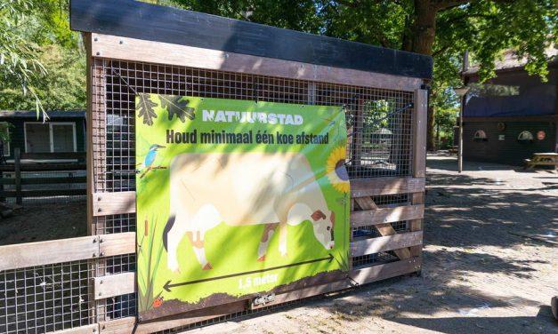 Houd één koe afstand!