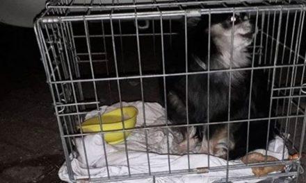 Hond achtergelaten op straat in bench in Rotterdam-Alexander