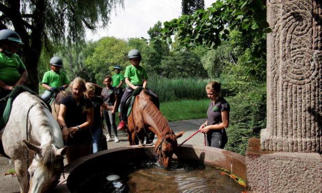 Werken als een Paard Vakantieschool in coronatijd
