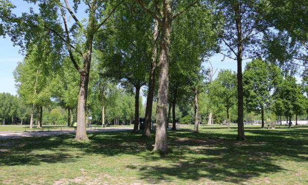 Rotterdam bereidt zich voor op verwachte drukte: parkeren bij Kralingse bos niet mogelijk