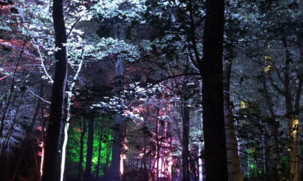 Lichtshow De Grote Schijn komt terug naar het Kralingse Bos