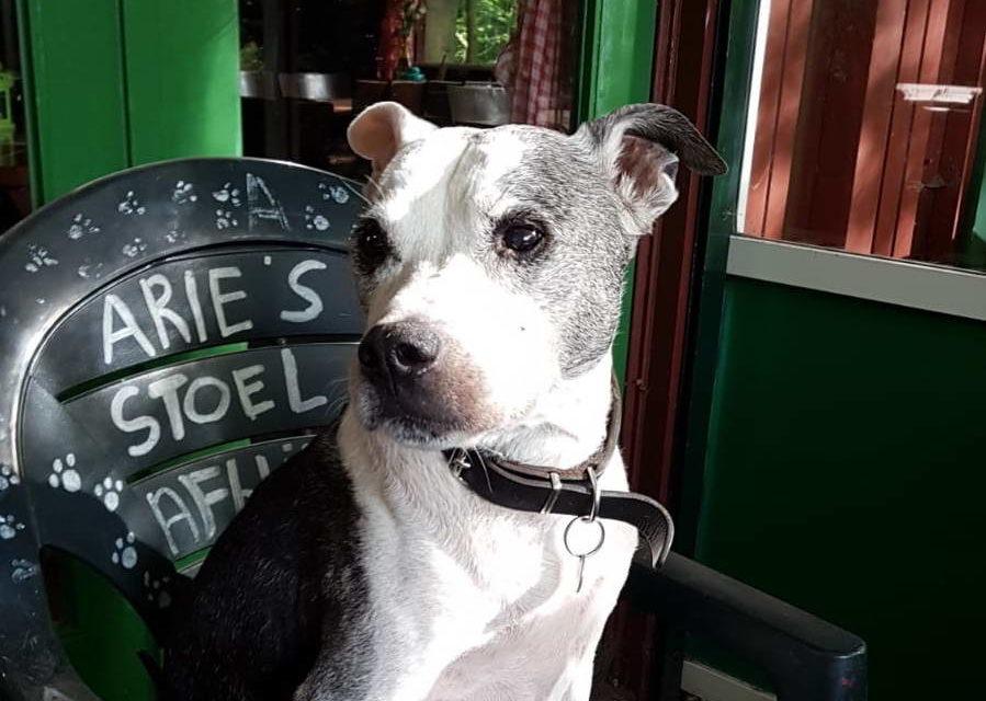 Arie, de hond van pannenkoekenhuis De Big, is niet meer