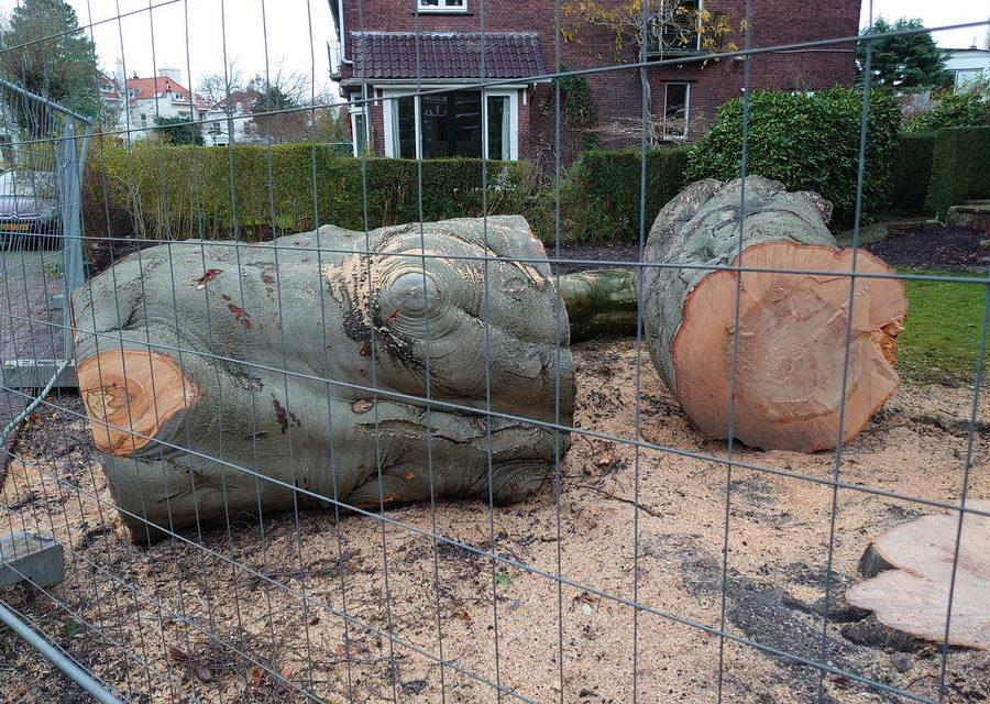 Motie 'Bescherm Rotterdamse bomen' aangenomen