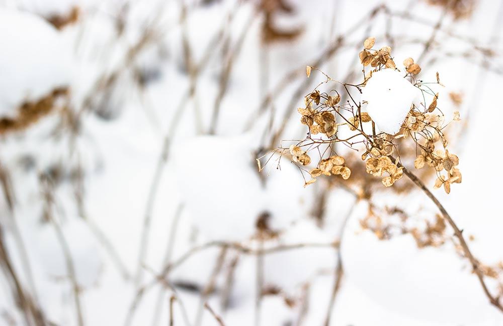 Drukte in Kralingse Bos ondanks coronamaatregelen