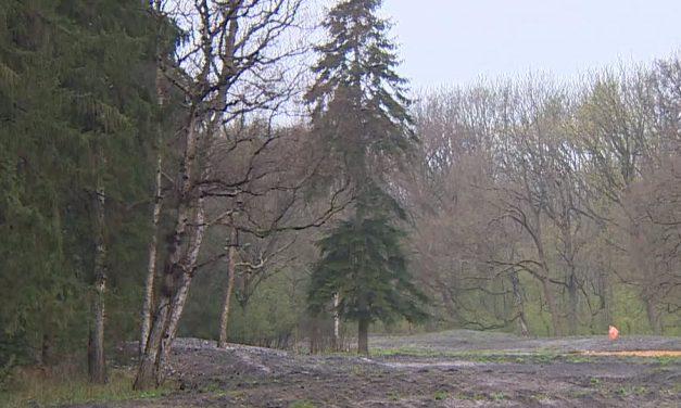 Wolvenvallei Kralingse Bos maakt ruimte voor meer natuur met nieuwe 'riviertjes'
