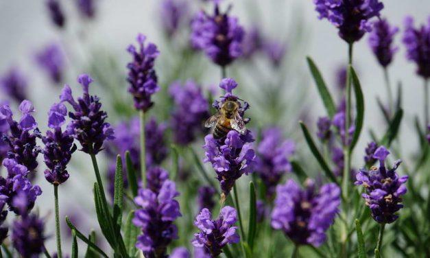 De 10 van 010: aandacht voor biodiversiteit in Rotterdam