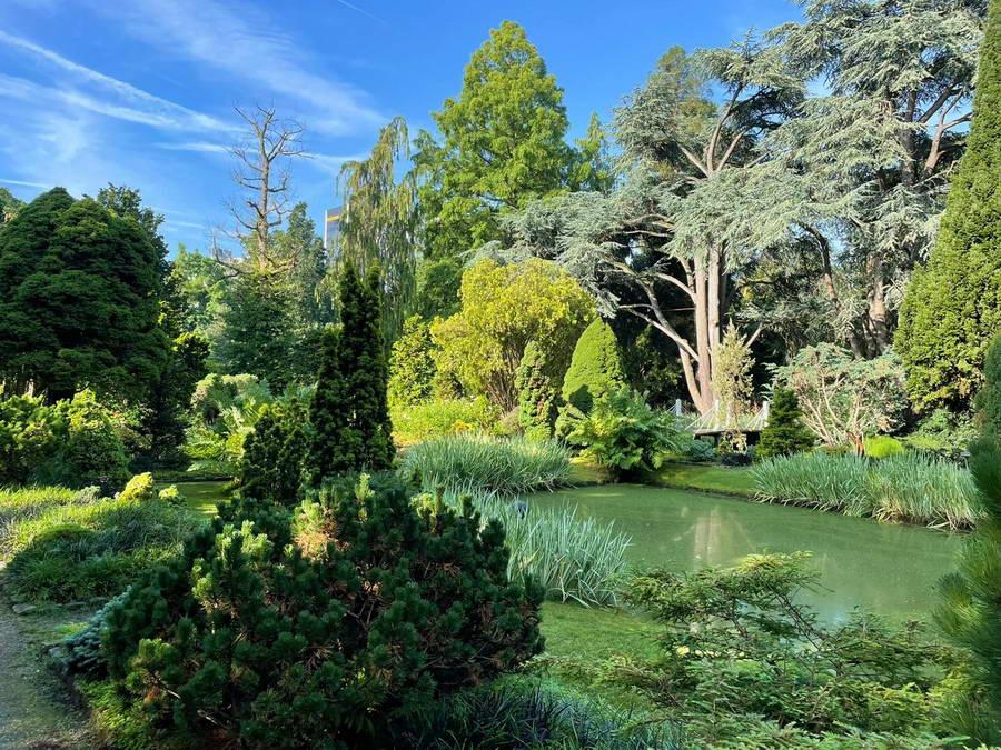 Herfstfair Trompenburg: de geuren en kleuren van het najaar